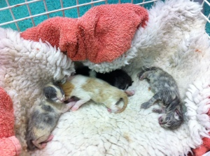 motherless kits - newborn