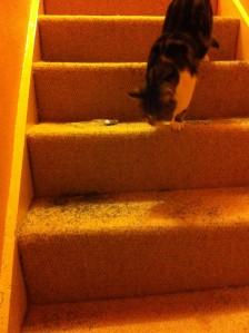 catnip incident1