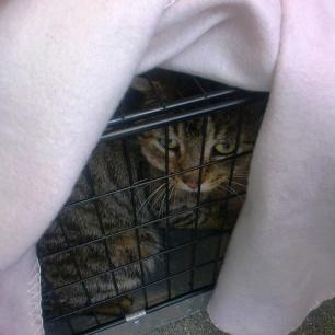 waiting at the vets