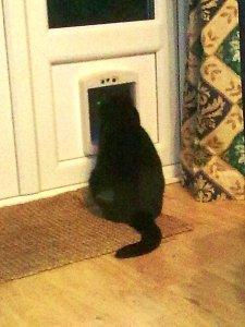 mog at the cat flap