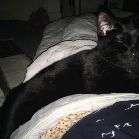 niki cuddling foster home