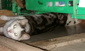 mum with kits in shed