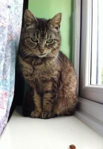 maya on windowsill1