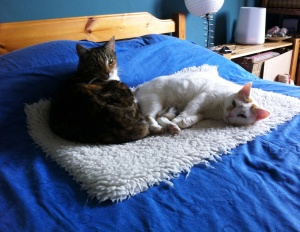 amber & honey on my bed