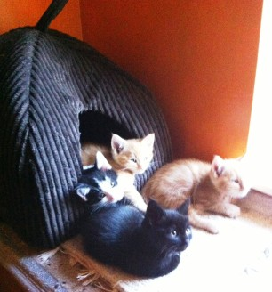 B team in igloo