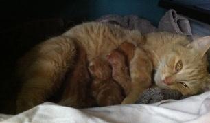 elsa with new borns