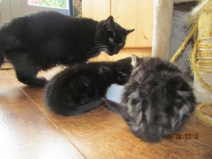 indie & inky eating with Sooty2