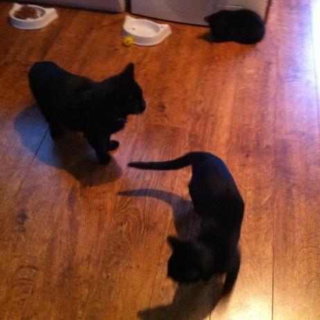 3 sizes of black3