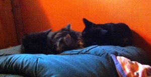 inky & indie with shadow1