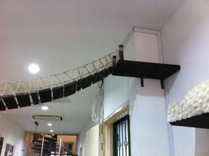 cat museum singapore nov 201515