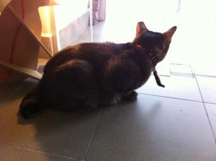 cat socrates shop1