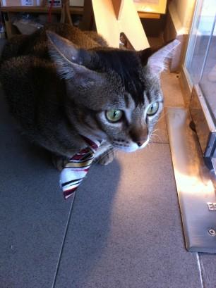 cat socrates shop2