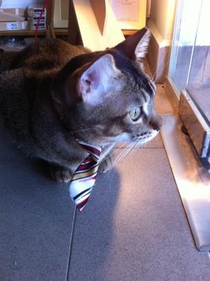 cat socrates shop3