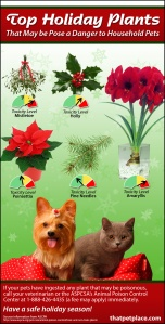 Holiday-Toxic-Plants1