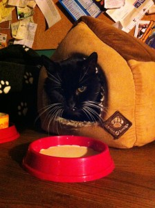 sooty in his house with cat milk1