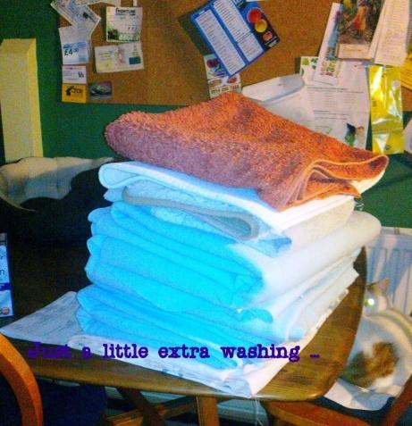 cat hotel 1 washing