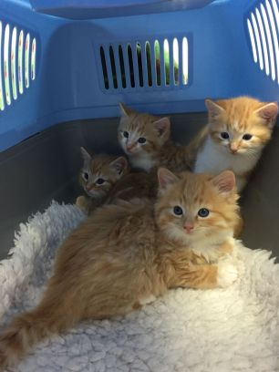 E team 6 weeks old at vets