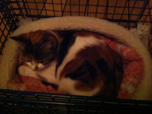 kitty arrives3