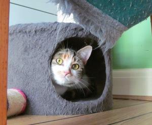 kitty settling in1