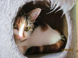 kitty settling in2