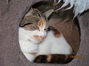 kitty settling in3