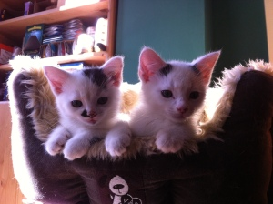 pixi & pudsey in their basket3
