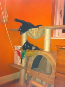 wispa & wynter playing2