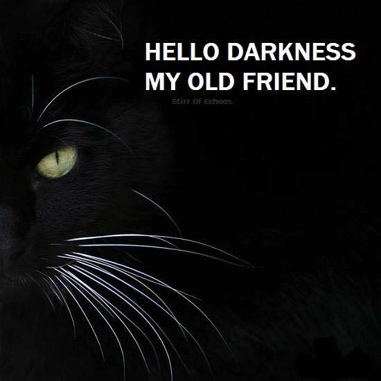 sound of silence 8 lives sheffield 8 cat rescue. Black Bedroom Furniture Sets. Home Design Ideas