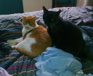 jango and sooty2