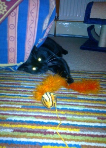 sooty being a kitten again3
