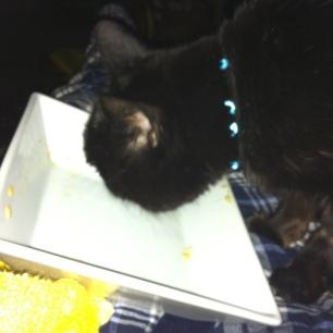 sooty finiishing my supper