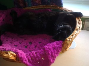 sooty in basket2