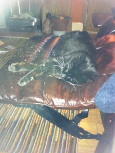 sooty in my chair1