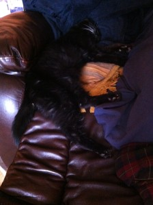 sooty in my chair3
