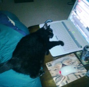 sooty lazing online1
