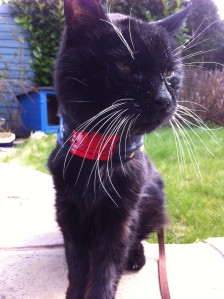 sooty out in garden4