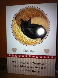 sooty rainbow bridge card