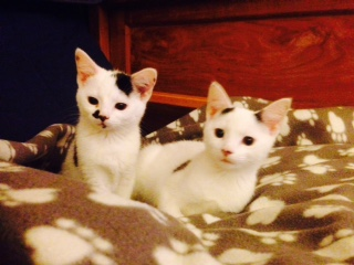 pixi & pudsey day one