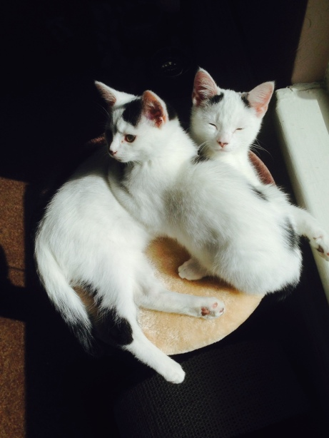 pixi & pudsey settling in3
