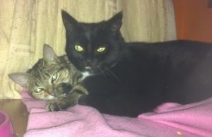 tabbytha & mowse cuddling each other3