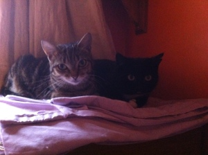 tabbytha & mowse now named1