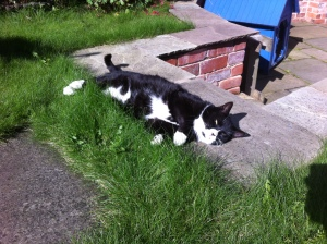 puddy-chilling-in-the-garden2