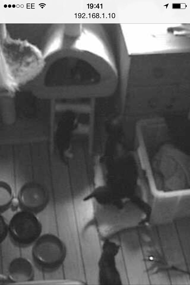 web cam stills1