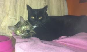 tabbytha & mowse cuddling each other2