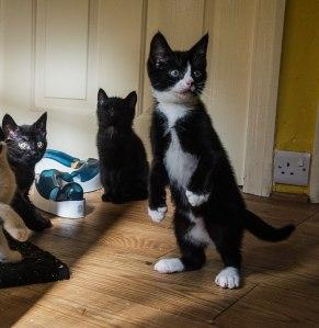 kittens- too black