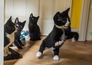 gang of rowdy kittens