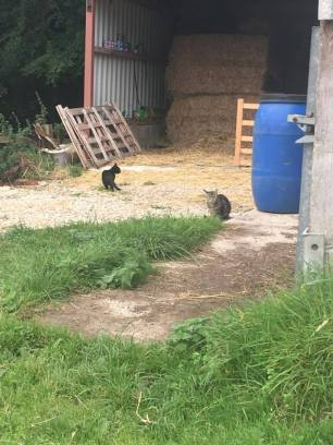 tabbytha-mowse-one-month-on-settled-and-free1