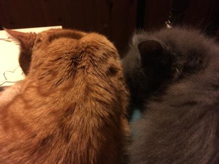 slightly grudging hendo cuddles