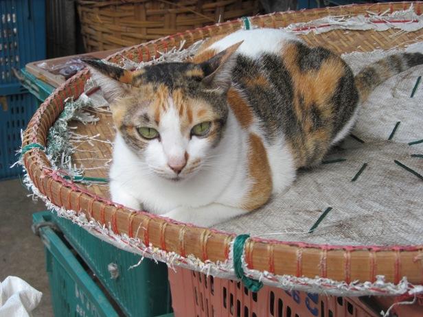 bangkok cat 1
