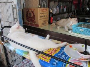 bangkok cats 3